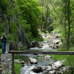 Natura la Cheile Turzii