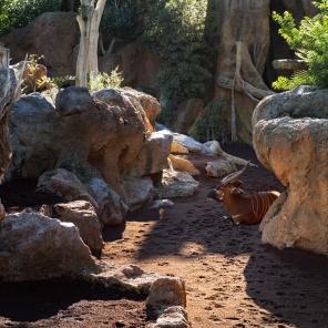 Valencia Bioparc - Zoo