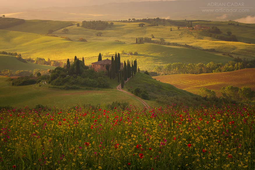 Toscana and poppies
